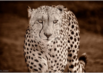ANP-WITH-LIZE-CHEETA_1065-large-done---Copy