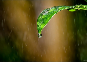 water-droplets_3733